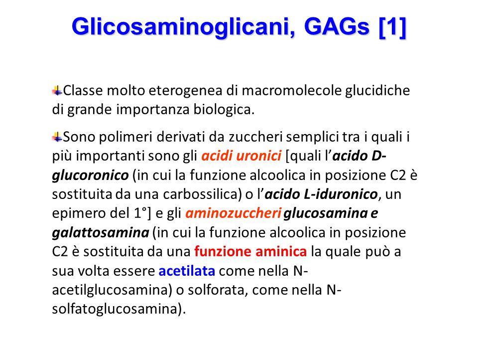 Glicosaminoglicani, GAGs [1]